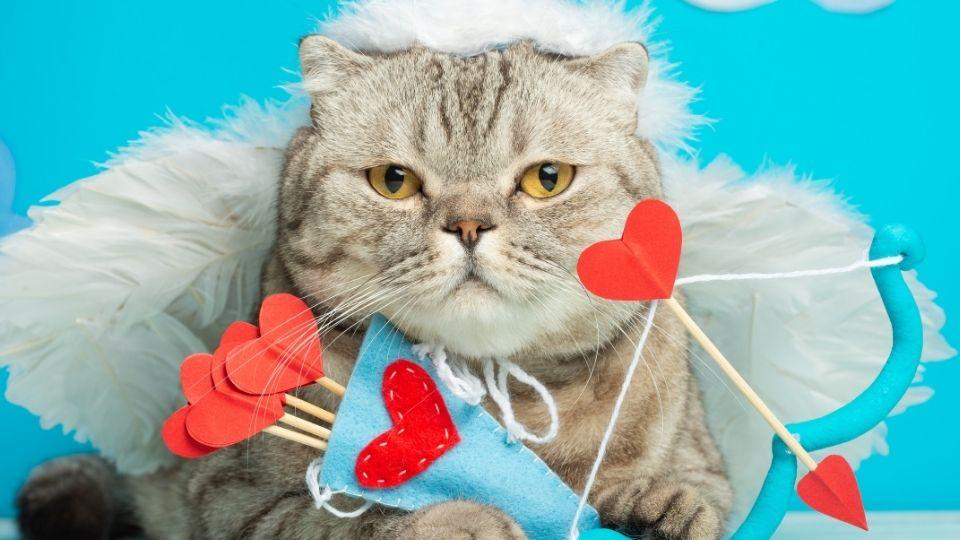 Instagram Kedi Hesabı İçin Etiket Tavsiyeleri
